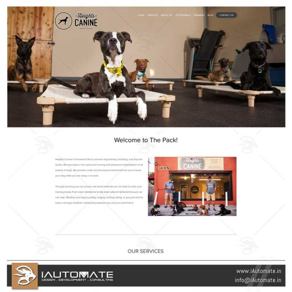 Dog Training website design